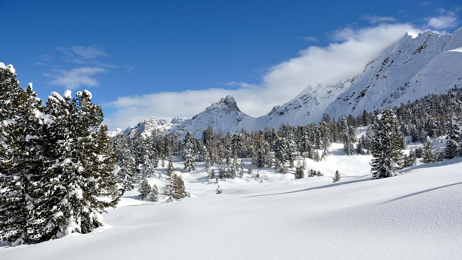 Alpine landscape with snow trees and peaks